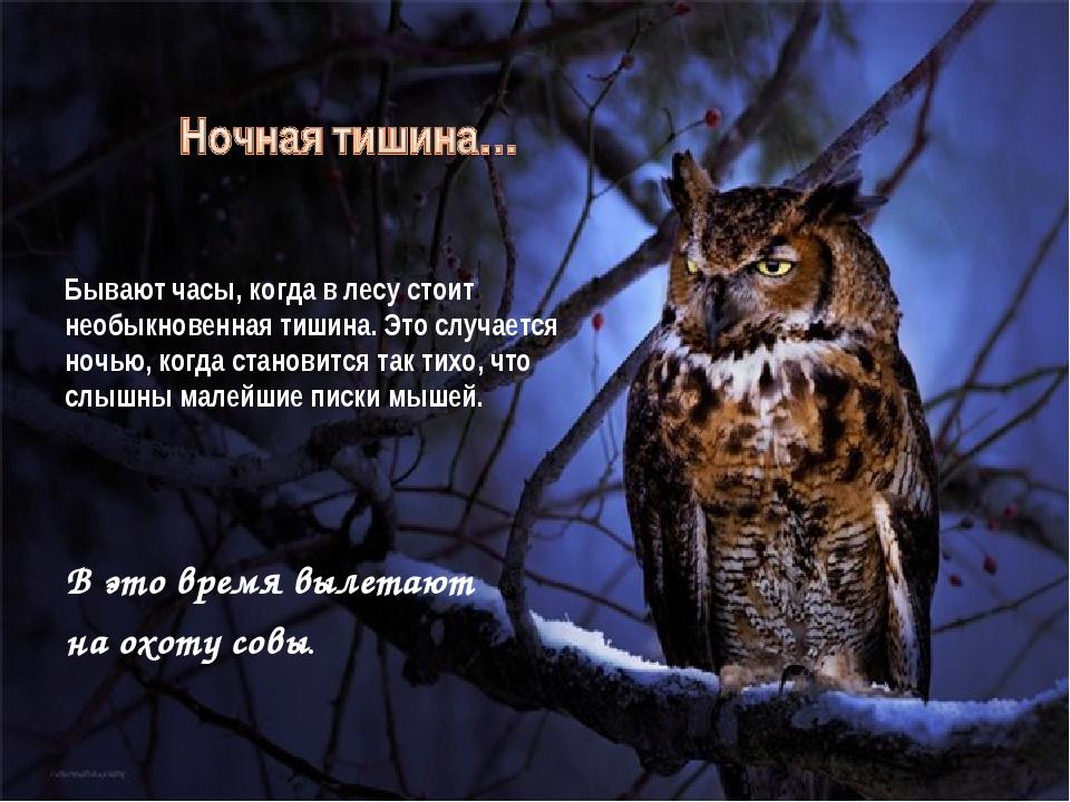 Бывают часы, когда в лесу стоит необыкновенная тишина. Это случается ночью,...