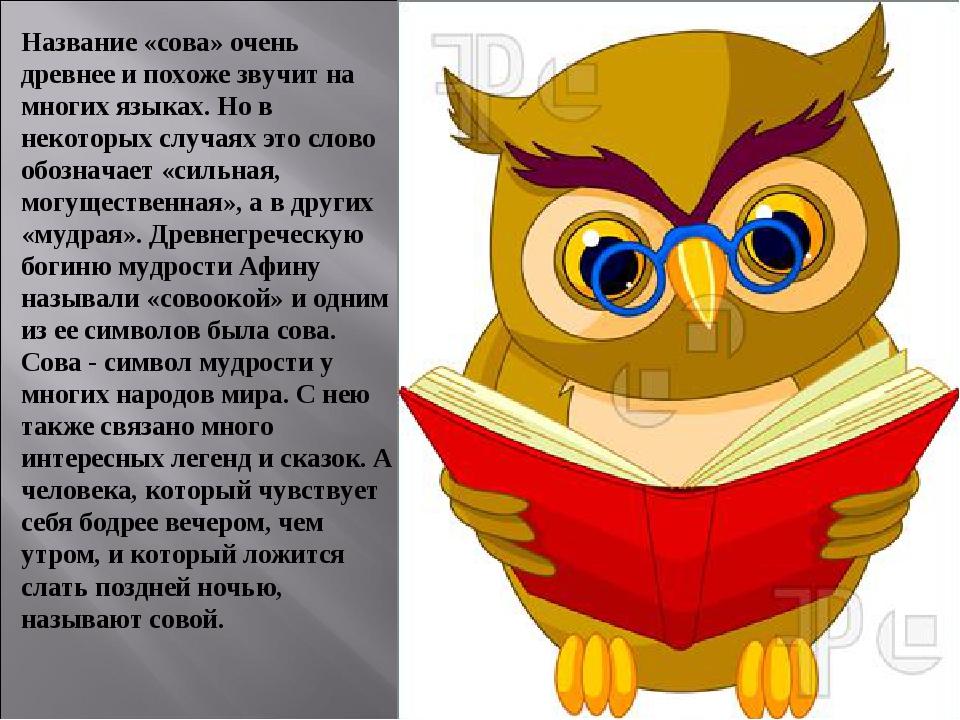 поздравление мудрость сова прибываем