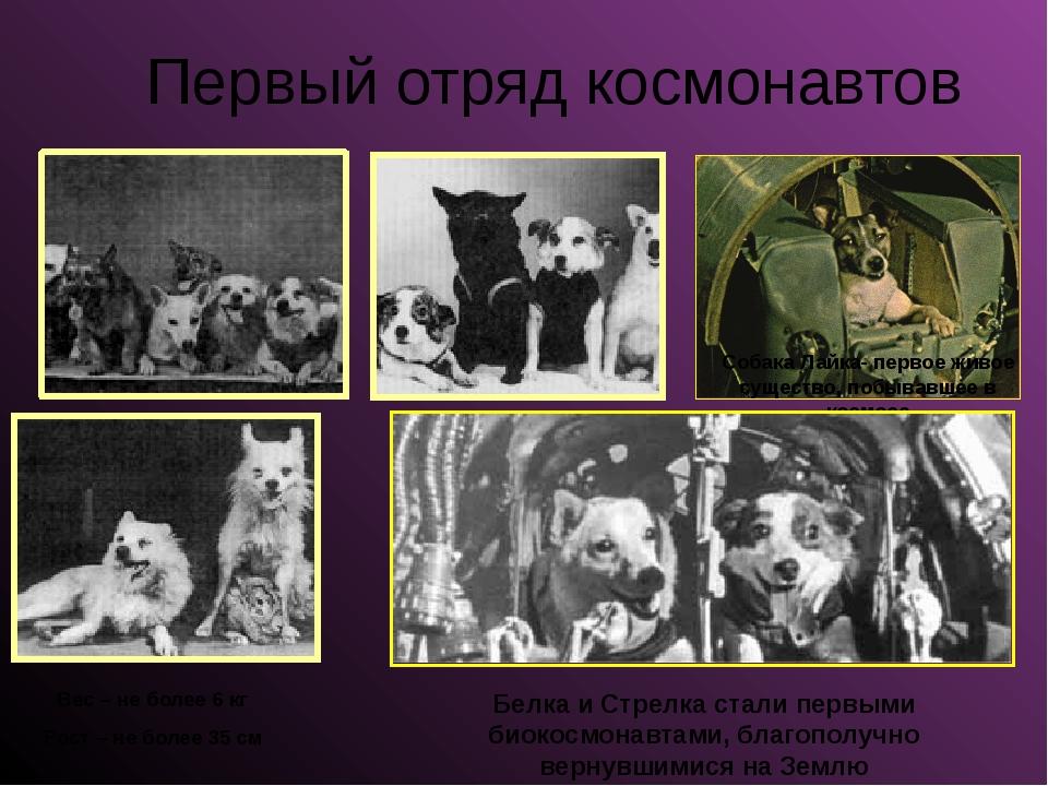 Первый отряд космонавтов Собака Лайка- первое живое существо, побывавшее в ко...