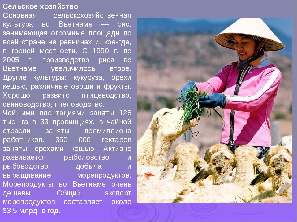 Сельское хозяйство Основная сельскохозяйственная культура во Вьетнаме — рис,...