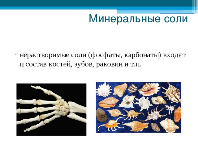 Минеральные соли нерастворимые соли (фосфаты, карбонаты) входят и состав кост...