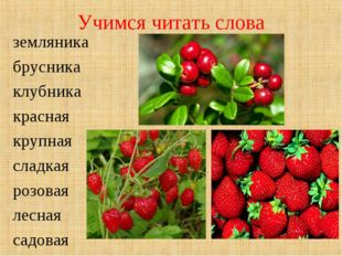 Учимся читать слова земляника брусника клубника красная крупная сладкая розов