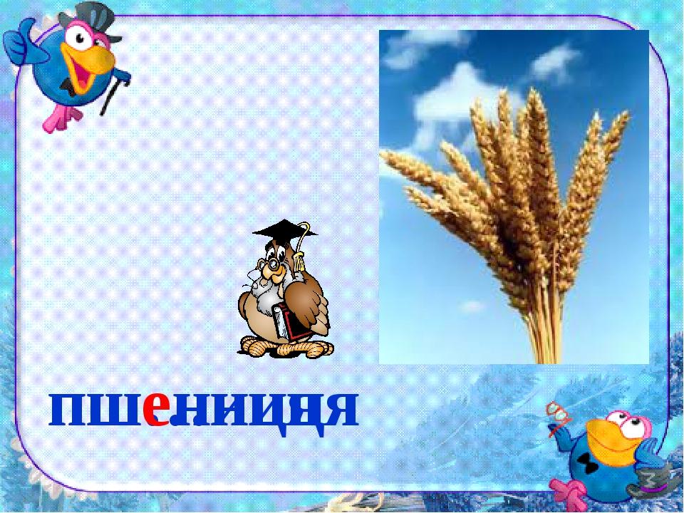 пш…ниця пшениця