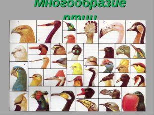 Многообразие птиц