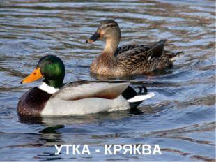 УТКА - КРЯКВА