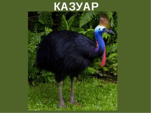 КАЗУАР