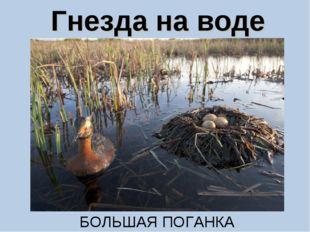 Гнезда на воде БОЛЬШАЯ ПОГАНКА