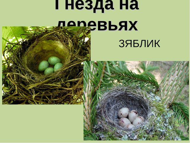 Гнезда на деревьях ЗЯБЛИК