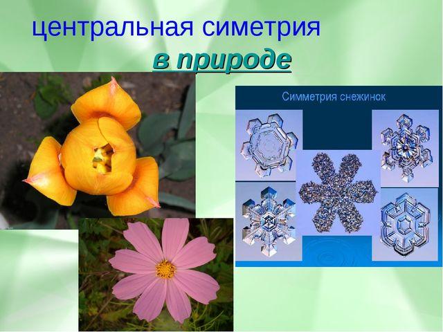 центральная симетрия в природе