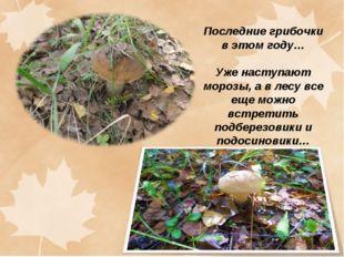 Последние грибочки в этом году… Уже наступают морозы, а в лесу все еще можно