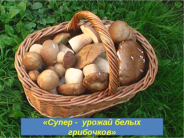 «Супер - урожай белых грибочков»