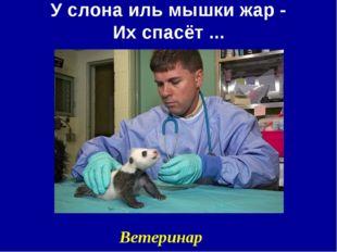 У слона иль мышки жар - Их спасёт ... Ветеринар