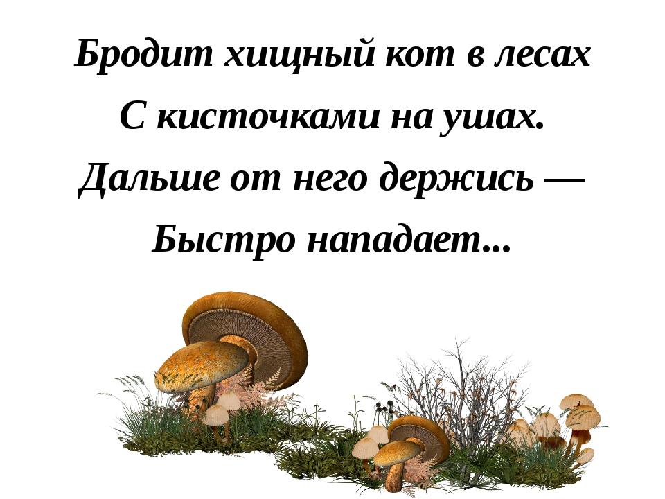 Бродит хищный кот в лесах С кисточками на ушах. Дальше от него держись — Быст...