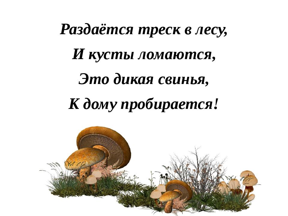 Раздаётся треск в лесу, И кусты ломаются, Это дикая свинья, К дому пробирается!