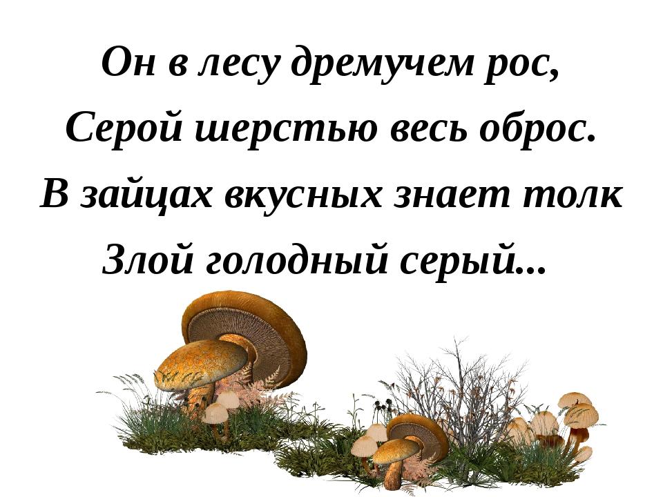 Он в лесу дремучем рос, Серой шерстью весь оброс. В зайцах вкусных знает толк...