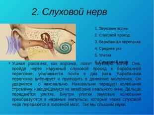 2. Слуховой нерв 1. Звуковые волны 2. Слуховой проход 3. Барабанная перепонка