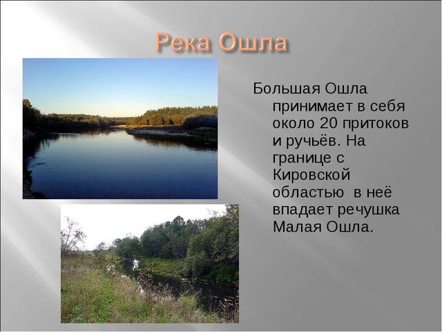 Большая Ошла принимает в себя около 20 притоков и ручьёв. На границе с Кировс...