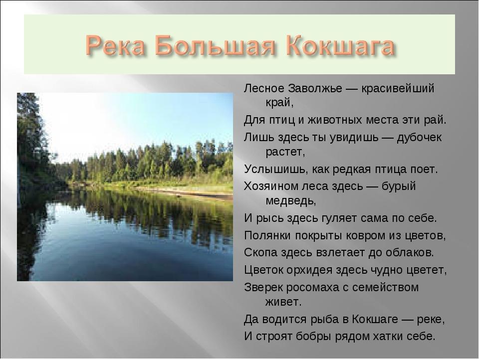 Лесное Заволжье — красивейший край, Для птиц и животных места эти рай. Лишь з...
