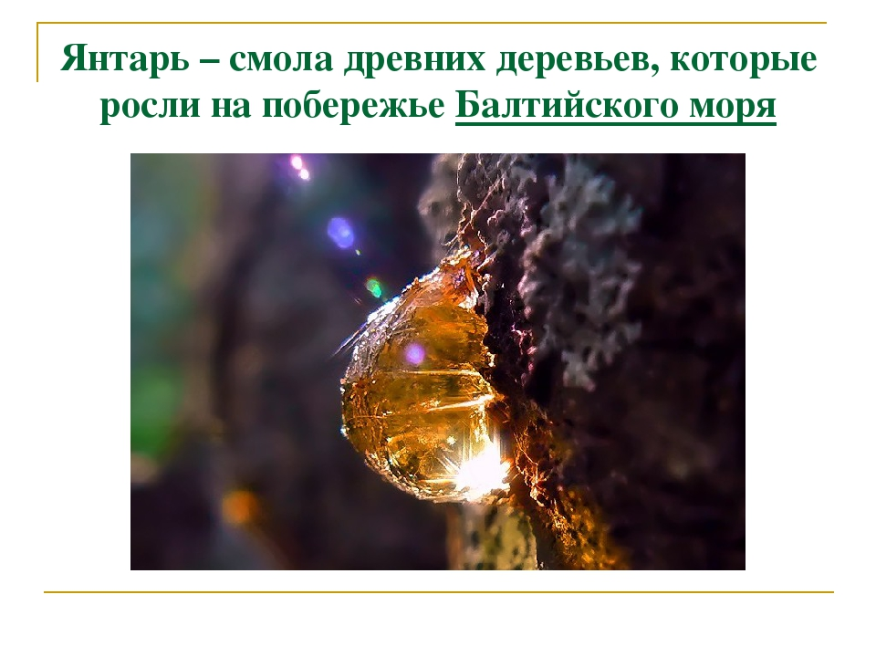 Янтарь – смола древних деревьев, которые росли на побережье Балтийского моря