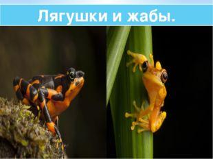 Лягушки и жабы.