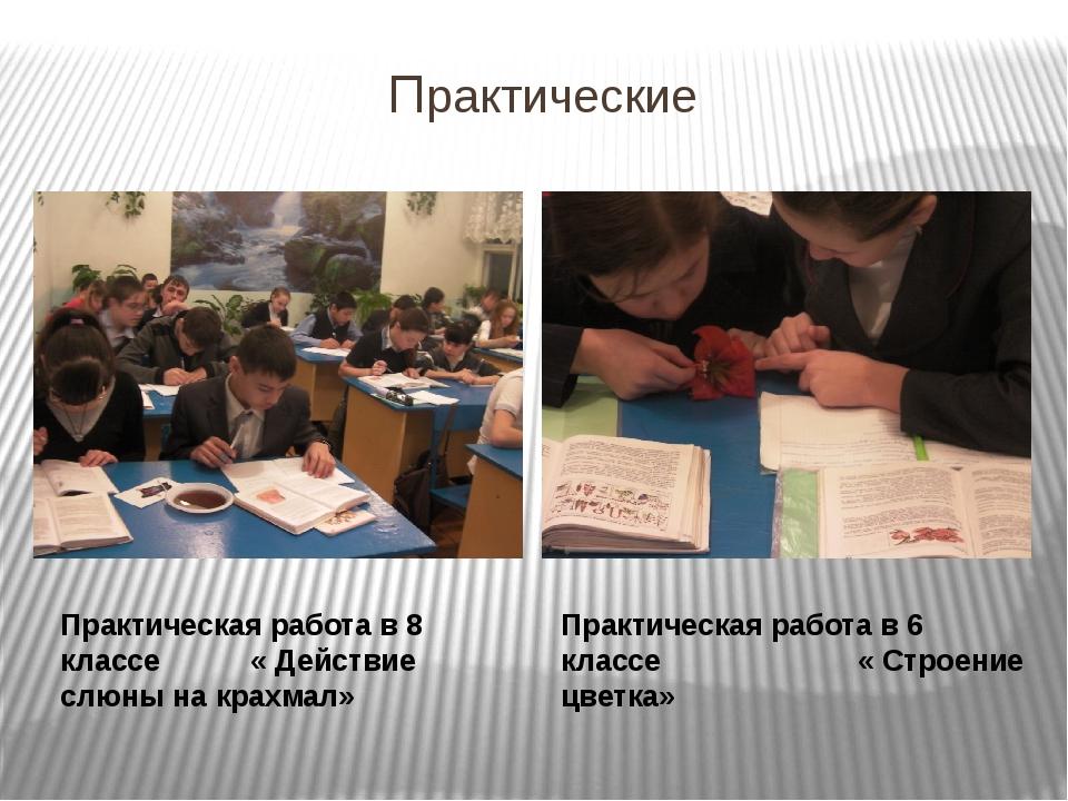 Практические Практическая работа в 8 классе « Действие слюны на крахмал» Прак...