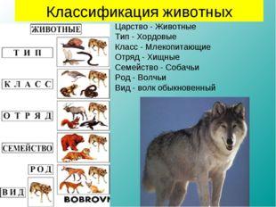 Царство - Животные Тип - Хордовые Класс - Млекопитающие Отряд - Хищные Семейс