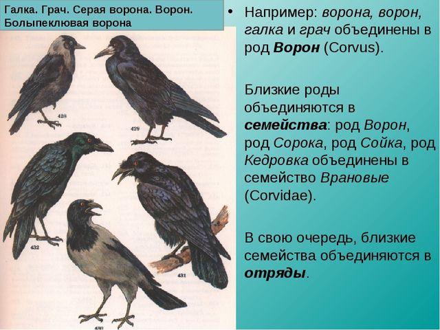 Например: ворона, ворон, галка и грач объединены в род Ворон (Corvus). Близки...
