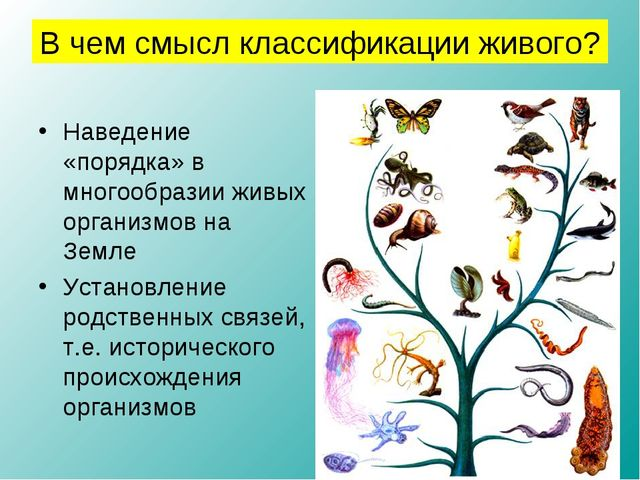 Наведение «порядка» в многообразии живых организмов на Земле Установление род...