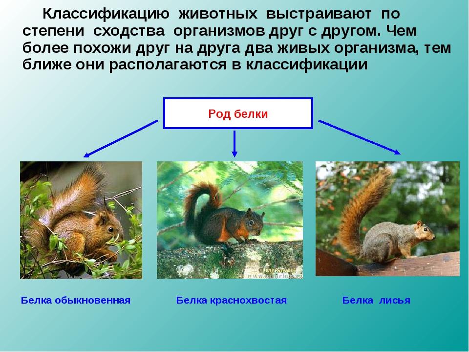 Классификацию животных выстраивают по степени сходства организмов друг с др...