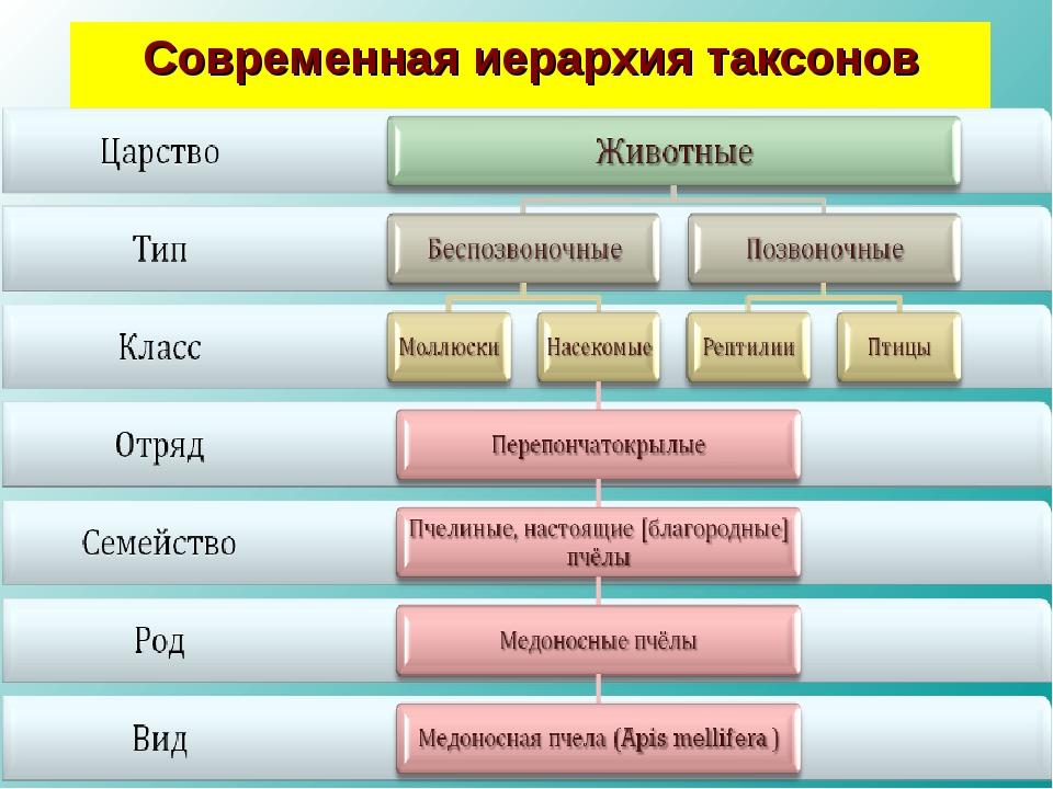 Cовременная иерархия таксонов