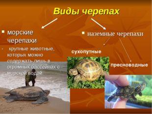 Виды черепах морские черепахи - крупные животные, которых можно содержать ли
