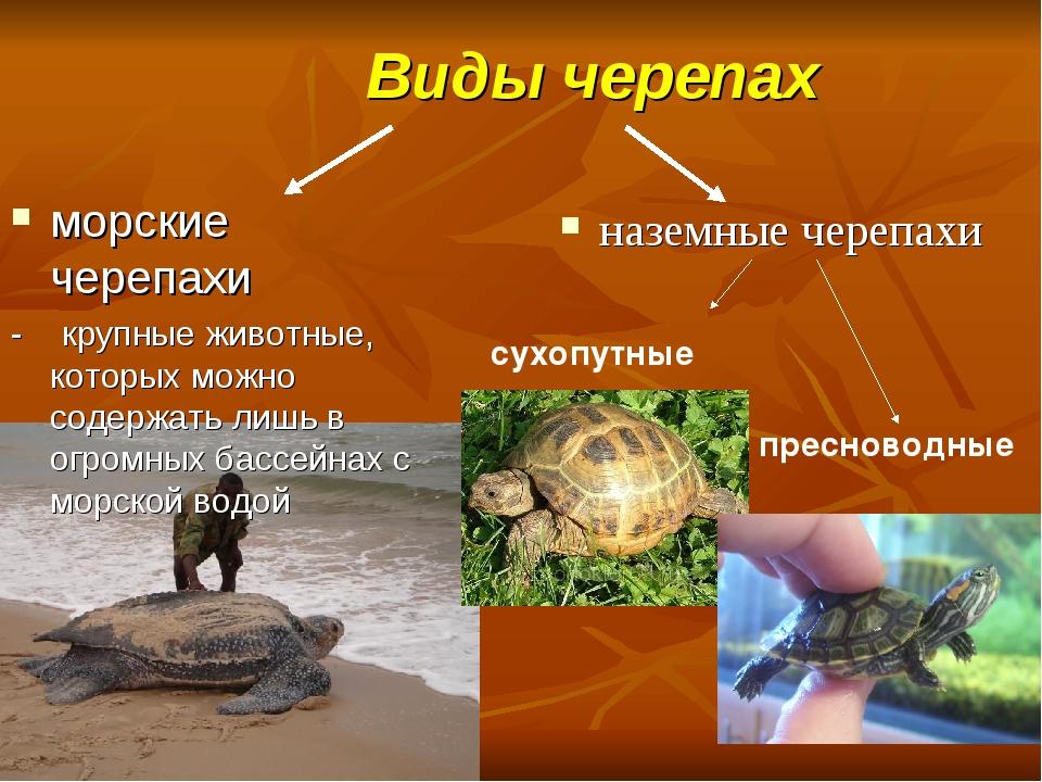 Виды черепах морские черепахи - крупные животные, которых можно содержать ли...