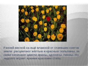 Ранней весной на ещё влажной от стаявших снегов земле расцветают жёлтые и кра