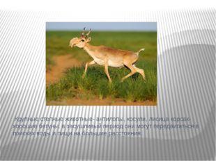 Крупные степные животные- антилопы, косули, лисица корсак- хорошие бегуны. в