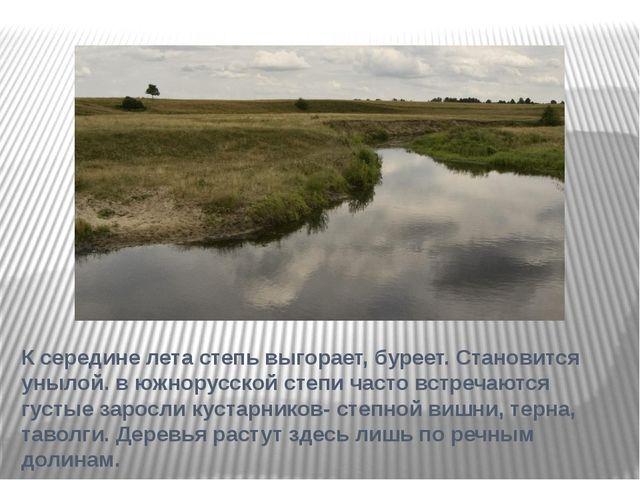 К середине лета степь выгорает, буреет. Становится унылой. в южнорусской степ...