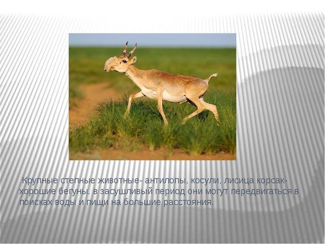 Крупные степные животные- антилопы, косули, лисица корсак- хорошие бегуны. в...