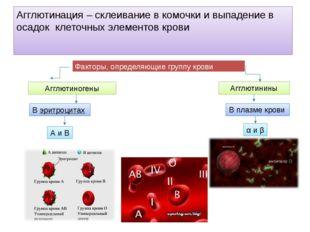 Агглютинация – склеивание в комочки и выпадение в осадок клеточных элементов