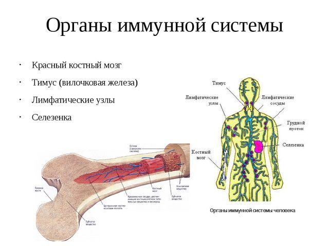 Органы иммунной системы Красный костный мозг Тимус (вилочковая железа) Лимфат...