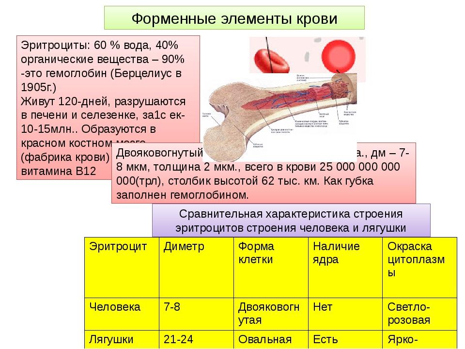 Форменные элементы крови Эритроциты: 60 % вода, 40% органические вещества – 9...