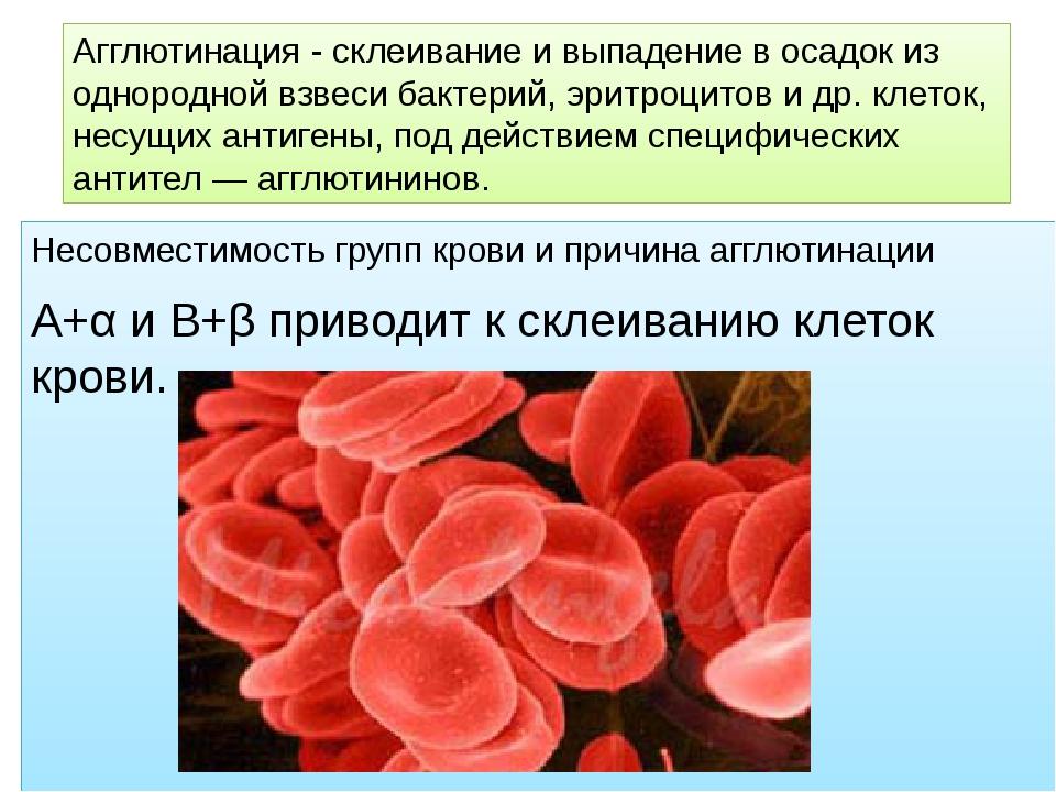 Несовместимость групп крови и причина агглютинации А+α и В+β приводит к склеи...