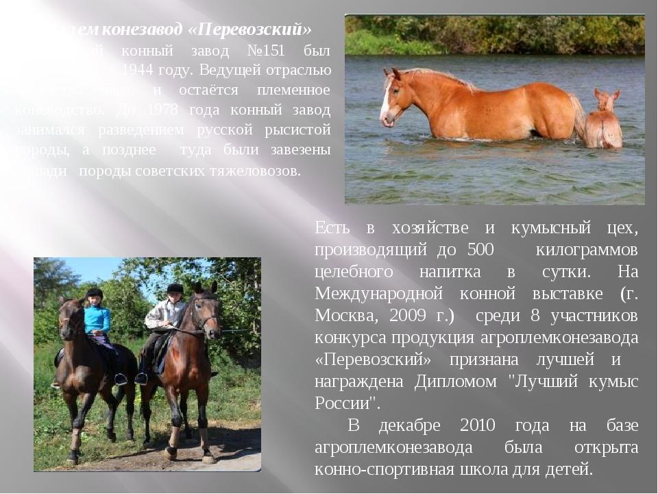 Агроплемконезавод «Перевозский» Перевозский конный завод №151 был организова...