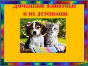 Домашние животные и их детеныши
