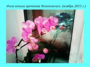 Фаза начала цветения Фаленопсиса (ноябрь 2015 г.)