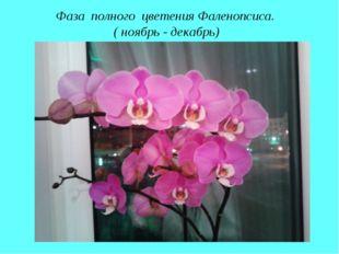 Фаза полного цветения Фаленопсиса. ( ноябрь - декабрь)