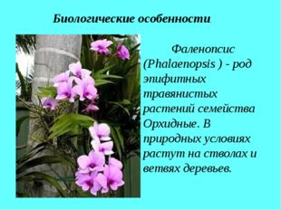 Фаленопсис (Phalaenopsis ) - род эпифитных травянистых растений семейства Ор
