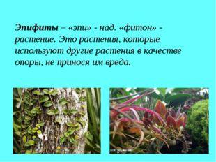 Эпифиты – «эпи» - над. «фитон» - растение. Это растения, которые используют д