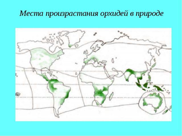 Места произрастания орхидей в природе