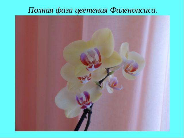 Полная фаза цветения Фаленопсиса.