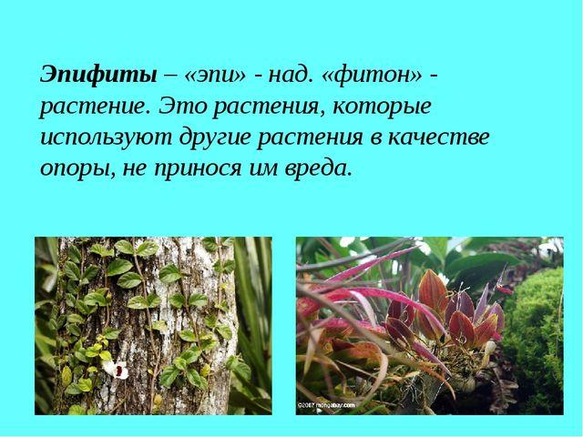 Эпифиты – «эпи» - над. «фитон» - растение. Это растения, которые используют д...