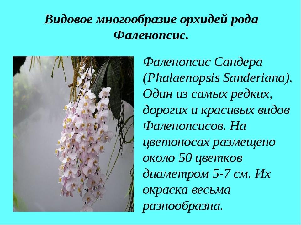 Видовое многообразие орхидей рода Фаленопсис. Фаленопсис Сандера (Phalaenopsi...